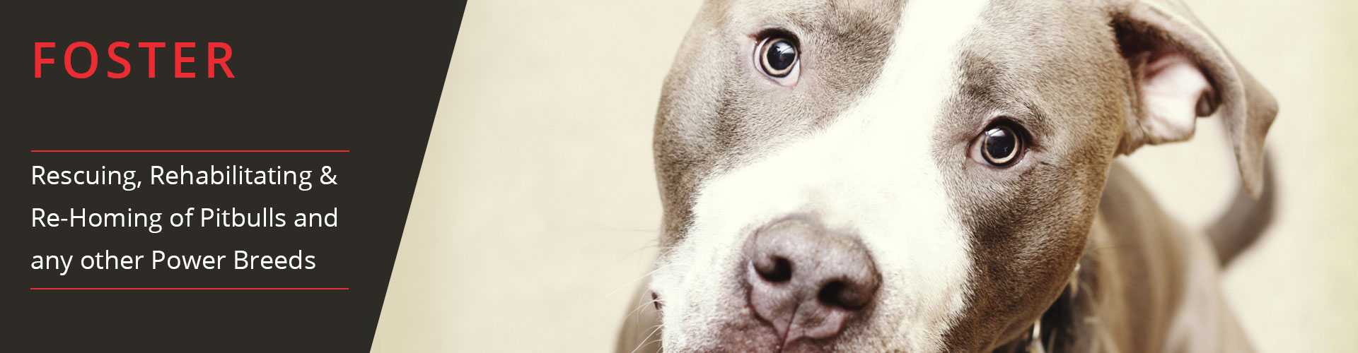 Pit Pals, Rescuing, Rehabilitating & Re-Homing of Pitbulls